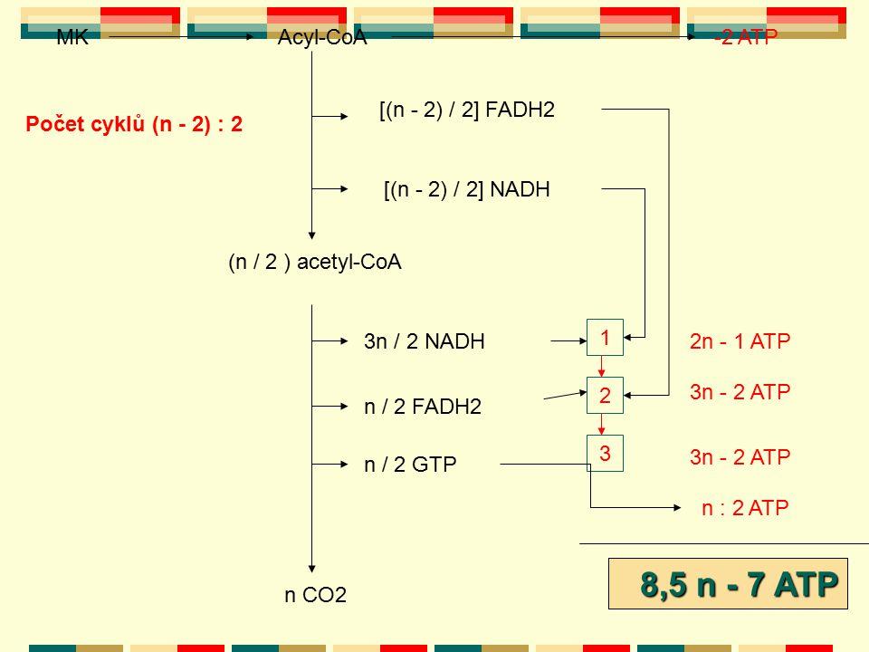 8,5 n - 7 ATP 8,5 n - 5 ATP Acyl-CoA MK -2 ATP [(n - 2) / 2] FADH2